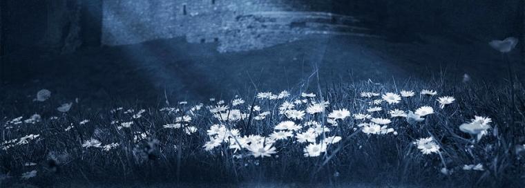 moon-light-daisies-svetlana-sewell