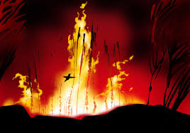 hummingbird-and-forest-fire2